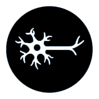 NERVOUS SYSTEM - SISTEMA NERVIOSO